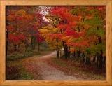 Route de campagne en automne, Vermont, Etats-Unis Photo encadrée par Charles Sleicher