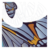 Iris Moth Design
