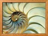 Close-up of Nautilus Shell Spirals Photo encadrée par Eric Kamp