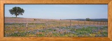 Texas Bluebonnets and Indian Paintbrushes in a Field, Texas Hill Country, Texas, USA Photo encadrée par Panoramic Images