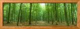 Pathway Through Forest, Mastatten, Germany Photo encadrée par Panoramic Images
