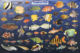 Laminated Tropical Fish Educational Science Chart Poster