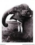 John Drysdale (An Elephant Never Forgets) Art Poster Print