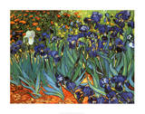 Irises Saint-Remy c1889 artwork by Vincent van Gogh