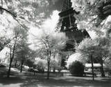 Afternoon in Paris (Eiffel Tower  Park)