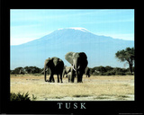 Tusk (Elephants) Wildlife Poster