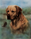Carolyn Chaney Golden Retreiver Art Print Poster