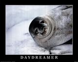 B Todd (Daydreamer  Seal) Art Poster Print