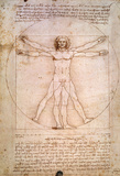 The Proportions of the Human Figure
