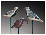 Verity Shorebirds Trio