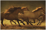 Into the Light horses animals photo by Tony Stromberg