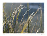 River Grasses I