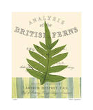 British Fern I