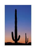 Arizona Moon & Cactus