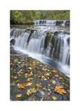 Sweet Creek Falls I
