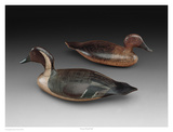 Stevens Pintail Pair