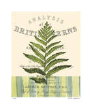 British Fern II