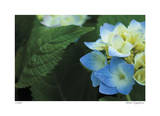 Hydrangea Detail 2