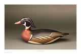 Lincoln Wood Duck