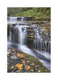 Sweet Creek Falls II