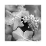 Botanical Study 2