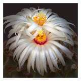 Artichoke Cactus