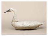 Cockey Swan