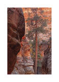 Zion Park Canyon