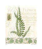 British Fern IV