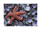 Sea Star and Clam Shells