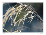 River Grasses II