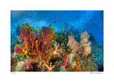 Reef Scenic 3