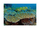 Table Coral and Reef Fish