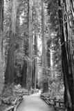 Tree Path I
