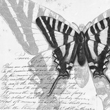 Butterflies Studies II