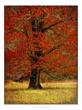 Autumn Oak II