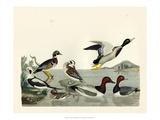 Duck Family II