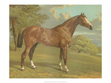Cassell&#39;s Thoroughbred I
