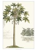 Non-embellished Palm Fresco III