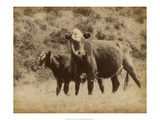 Lone Star Cows II