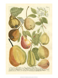 Plentiful Pears II