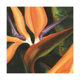 Bird of Paradise Tile IV