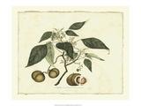 Delicate Botanical II