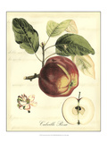 Printed Tuscan Fruits I