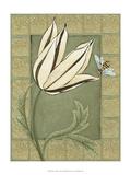 Ivory Tulip I