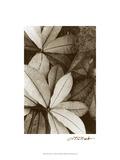 Garden Textures I