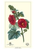 Non-embellished Crimson Bloom IV