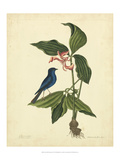 Catesby Bird & Botanical IV