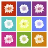 Vivid Bouquet