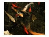 Goldfish Pond II